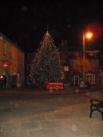 christmas_tree_festival_2013_20140220_1722182765